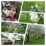 Когда яблони цветут